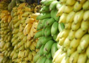 pisang-chandra-ekajaya
