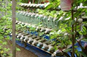 yohanes-chandra-ekajaya-budidaya-ikan-dan-tanaman-di-rumah